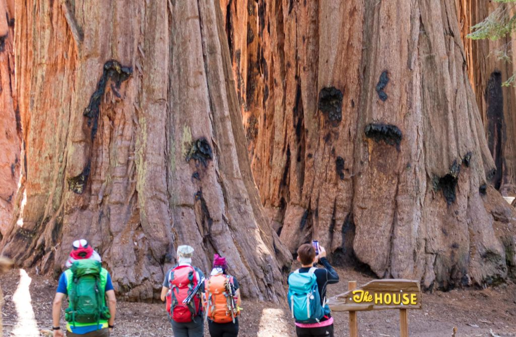 'The House' in Sequoia National Park, California