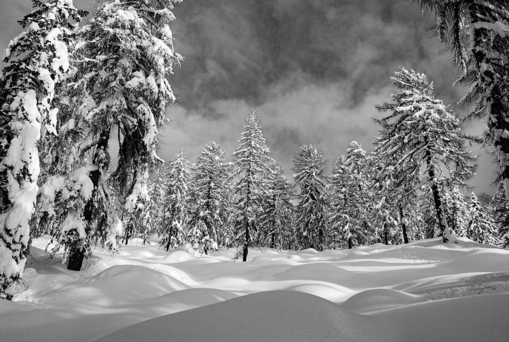Nel bosco, Dolomiti
